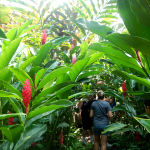 explore-tropical-veracruz-g-3